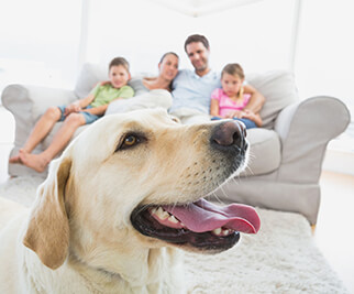 indoor-air-quality-family